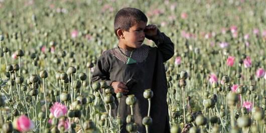 جامعه جهانی در مبارزه با مواد مخدر در افغانستان ناکام بوده است