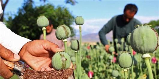 چگونه افغانستان پایتخت مواد مخدر جهان شد؟