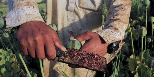جامعه جهانی و دولت افغانستان در مبارزه با موادمخدر شکست خورده است