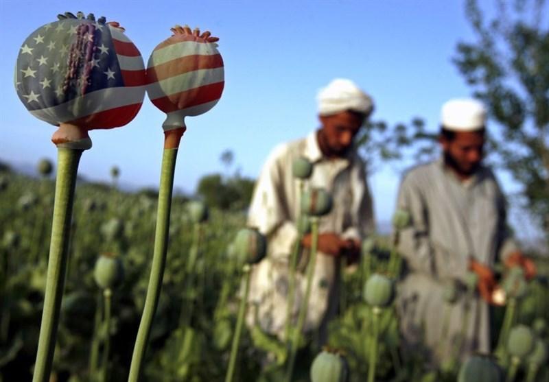 افزایش کشت مواد مخدر در ۲۴ ولایت افغانستان در سایه حضور آمریکا