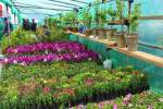 افتتاح  نمایشگاه گل پایتخت در پارک حصه اول خیرخانه