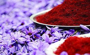 حاصلات زعفران در هرات، ۲۰درصد افزایش یافتهاست